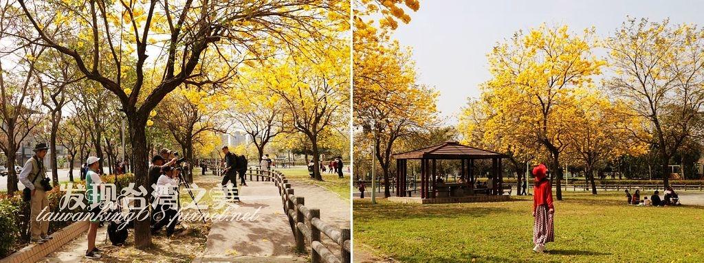 2020廍子公園黃花風鈴木