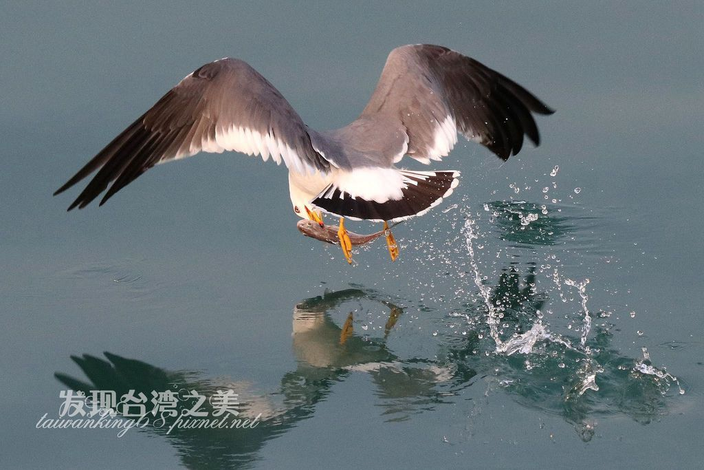 海鷗_2020022901