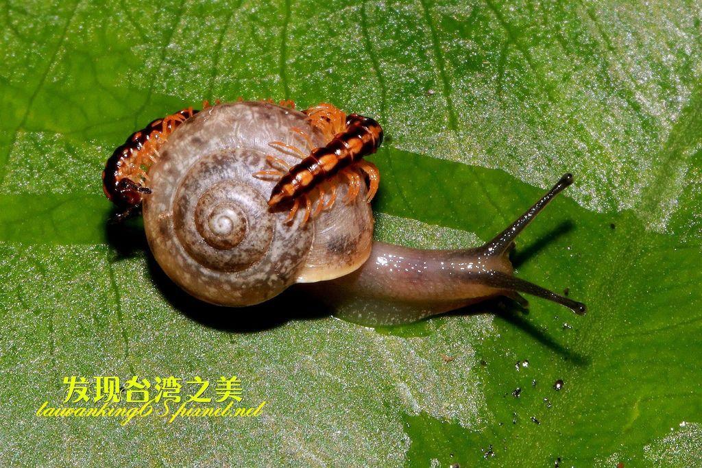 蜈蚣與蝸牛