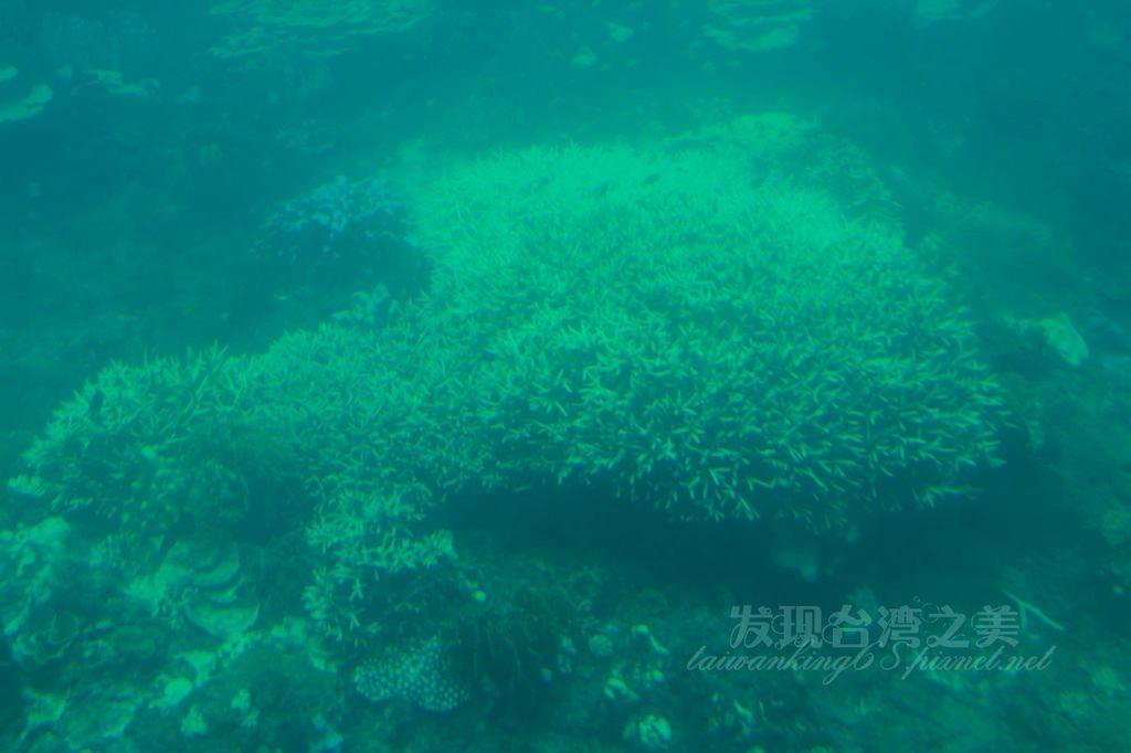 墾丁後壁湖搭乘半潛艇看海底世界