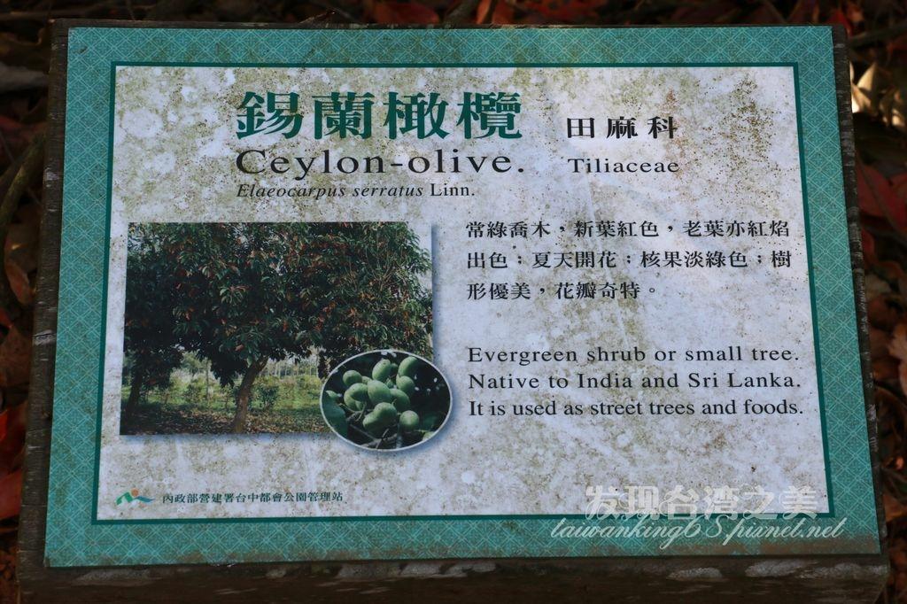 錫蘭橄欖隧道-都會公園第四彎道