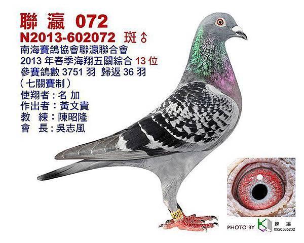 2013-602072    聯瀛綜合13.jpg