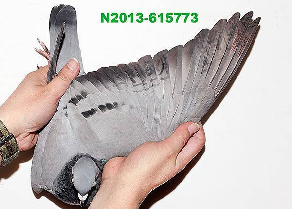 2013-615773翅膀.JPG