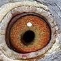 2013-615773眼睛.JPG