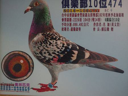 2013-103474   俱樂部綜合10