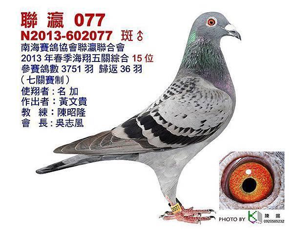 2013-602077    聯瀛綜合15