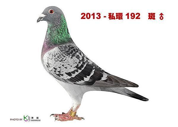 名加M1-28-2013-私環192 斑公