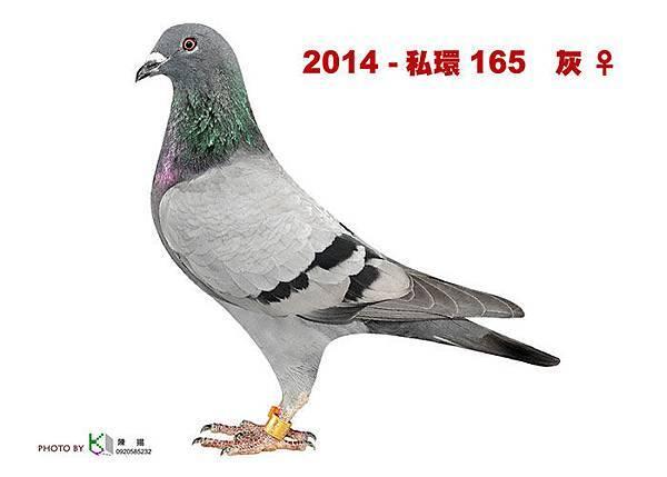名加M1-19-2014-私環165 灰母