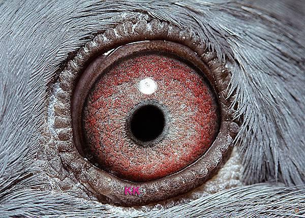 眼-名加M1-19-2014-私環165 灰母