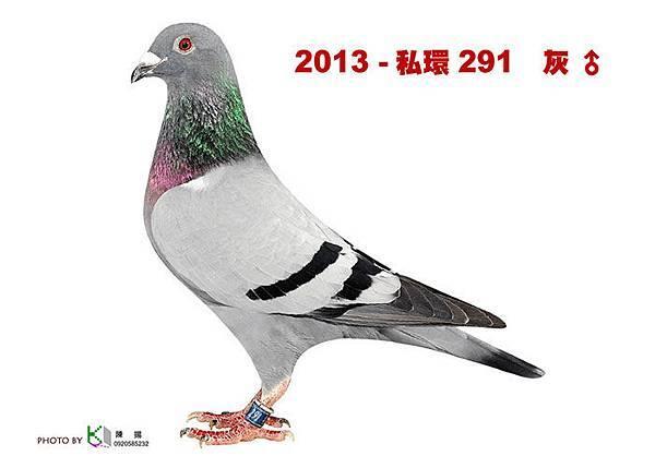 名加M1-21-2013-私環291 灰公