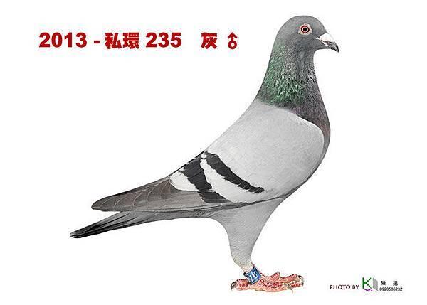 名加M1-20-2013-私環235 灰公