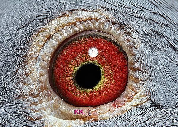 眼-名加M1-28-2013-私環192 斑公