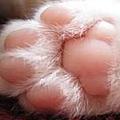 可愛的腳腳