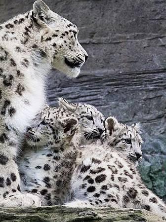 動物家人3_縮圖.jpg