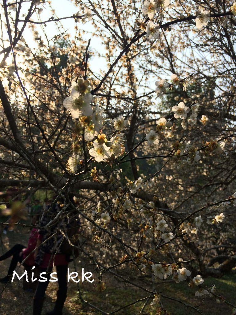 2015-01-17 15.40.30 HDR.jpg