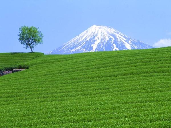 移動富士山.jpg
