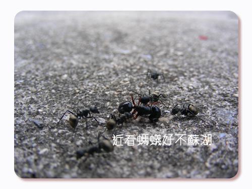 3螞蟻.jpg
