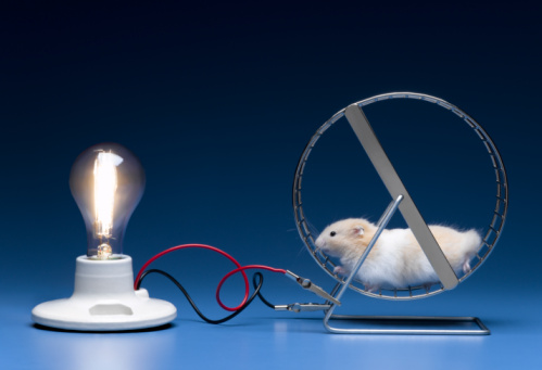 hamster_electricity.jpg