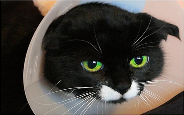 hurt cat.jpg
