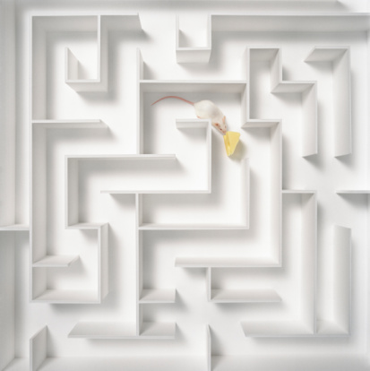 mouse_maze.jpg