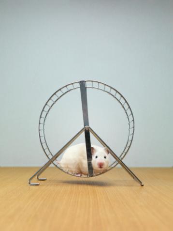 hamster_stop.jpg