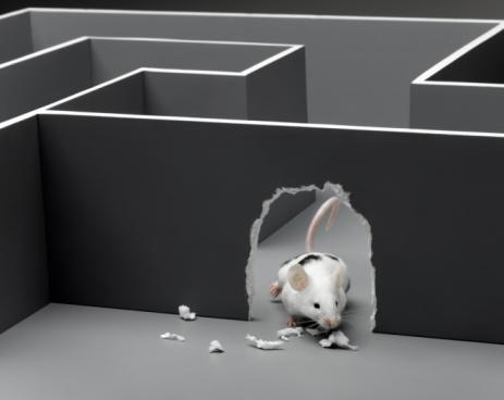 mouse chew_maze.jpg