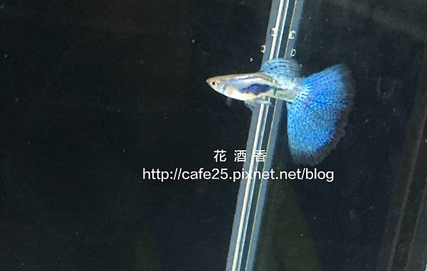 2017台灣觀賞魚博覽會