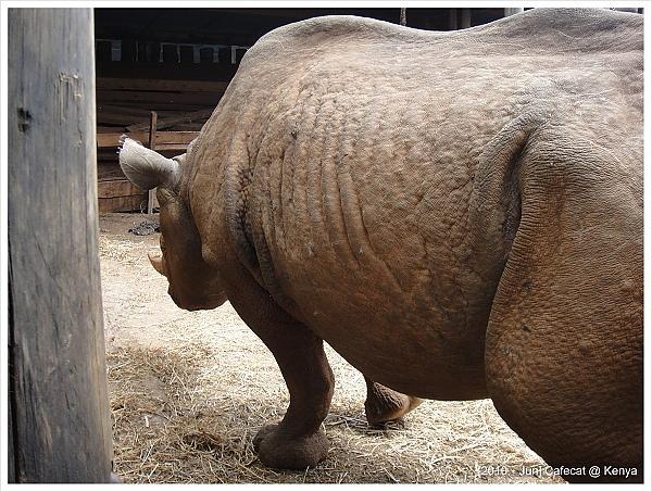 大象孤兒院裡面也有養黑犀牛