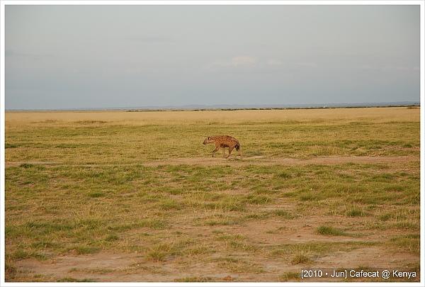 非洲鬣狗Hyena
