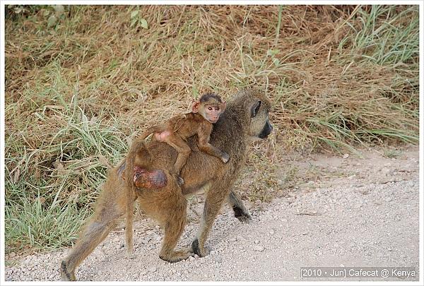 小狒狒很黏媽媽