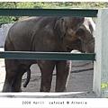 0427 這是我第一次這麼近距離看到大象....
