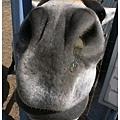 0427 大頭馬看到我的鏡頭一直湊上來