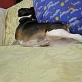 20080504 大家來猜猜這是什麼睡姿?
