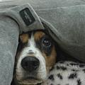 20080518 趴在沙發上博取同情