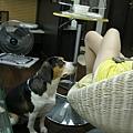 20080617 努力裝乖ing