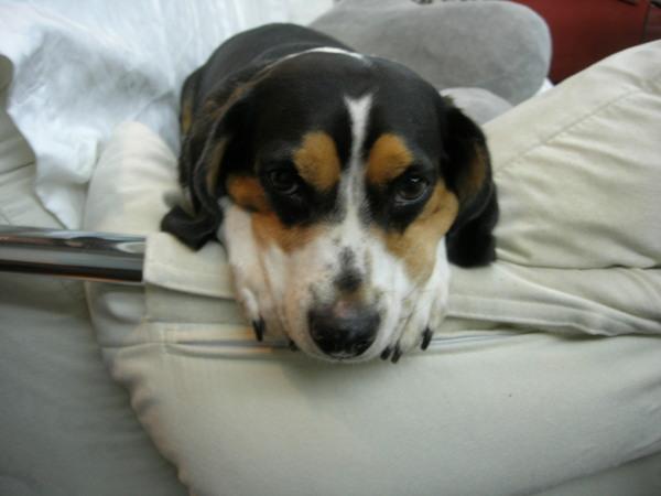 20080707 我今天很乖...有沒有要去散步呀?????