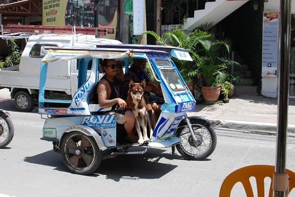 最主要的交通工具tricycle