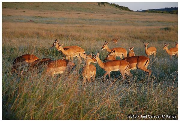 impala真的長得很像小鹿斑比(人家明明就是羊)