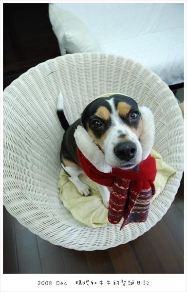 20081225 米格魯一定要有大頭狗的啦~