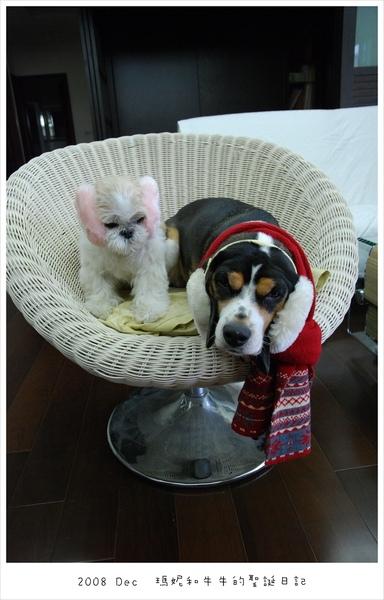20081225 瑪妮也有一個耳罩(粉紅色的好可愛)