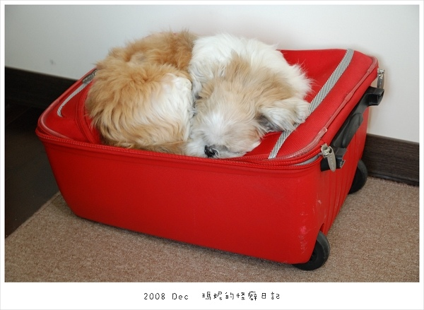 20081226 瑪妮的睡覺怪癖