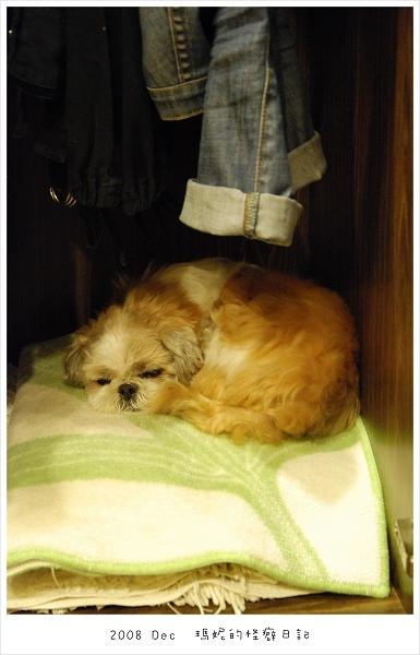 20081226 偷跑進我的衣櫃睡覺