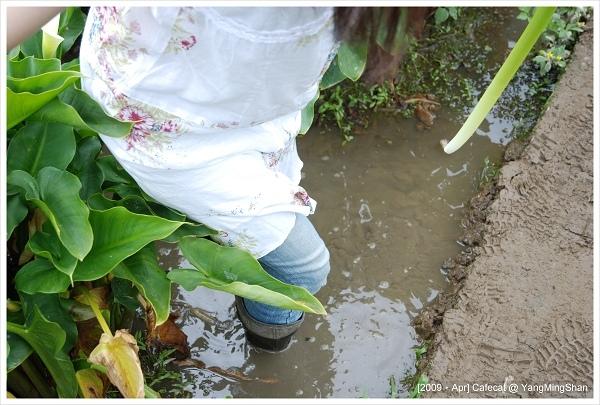 泥巴水裡面寸步難行