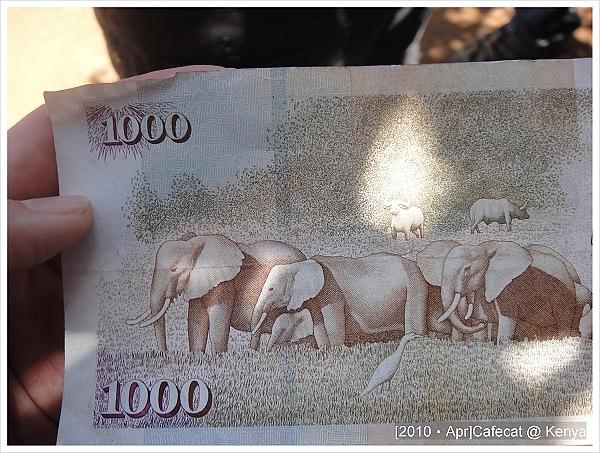 肯亞的紙幣上也有大象耶!