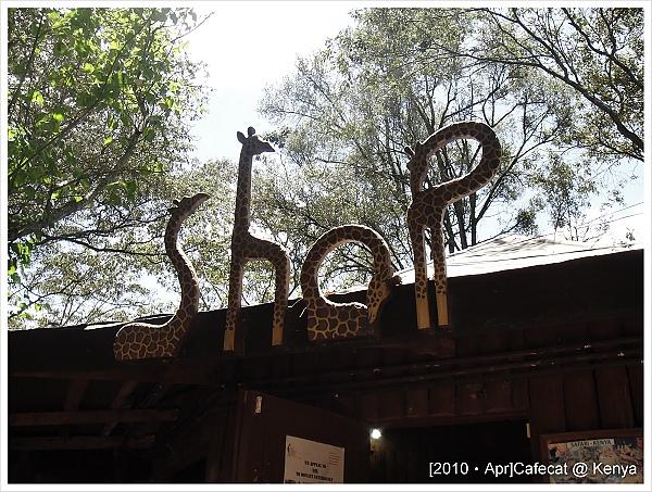紀念品店的招牌也是長頸鹿喔!