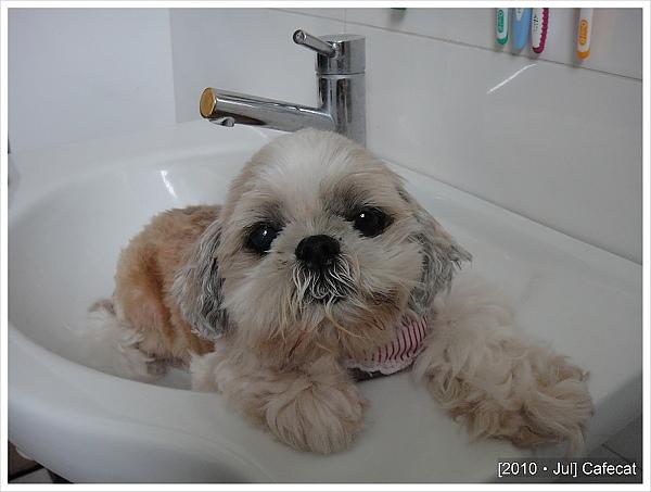 20100707瑪妮陪我大便~~~在洗手台裡肚菇