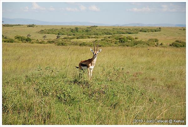 這隻蹬羚超可愛一直抖腳