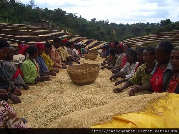 椰加雪啡 伊索比亞