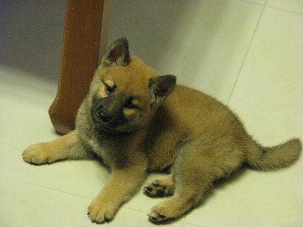 5956969:Maru San (一):養寵物的第一課