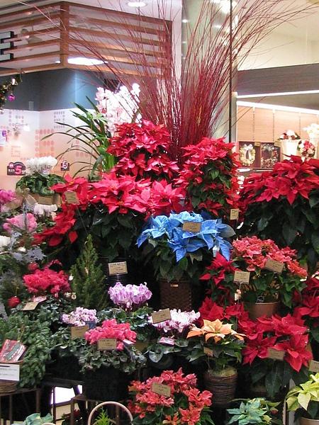 花店中五彩繽紛的花